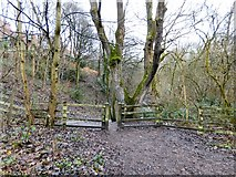SJ9594 : Entrance to Gower Hey Woods by Gerald England