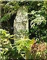 SX1367 : Inscribed stone, Welltown by Derek Harper