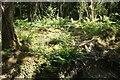 SX1066 : Ferns near Cardinham Water by Derek Harper