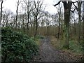 SE4208 : Path heading north-west, out of Houghton Common by Christine Johnstone