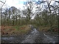 SE4208 : Track heading south-east, Houghton Common by Christine Johnstone