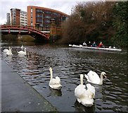 SK5803 : Rowers on the Grand Union Canal in Leicester by Mat Fascione
