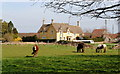 ST8080 : Ponies, Acton Turville, Gloucestershire 2014 by Ray Bird