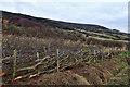 NZ9702 : Newly laid hedge by Mick Garratt