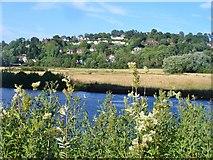SU9948 : Shalford Meadows by Colin Smith