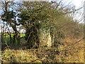 TF3194 : Overgrown platelayer's hut by Jonathan Thacker