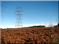 TG4600 : Power lines in Fritton Wood by Evelyn Simak