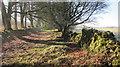 ST5257 : A green lane beside Hazel Manor plantation by Dr Duncan Pepper