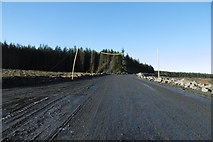 NS5013 : Big road in the forest by Richard Webb