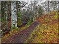 NH8449 : Path above the Allt Dearg by valenta