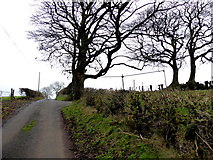 H5366 : Trees along Laragh Road by Kenneth  Allen