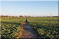 TR2641 : Footpath to St Radegund's Abbey by Ian Capper