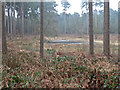 SJ5370 : In Delamere (5) by Anthony O'Neil