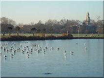 TQ3377 : Frozen lake in Burgess Park by Malc McDonald