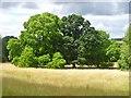 SU5927 : Hinton Ampner Park by Colin Smith