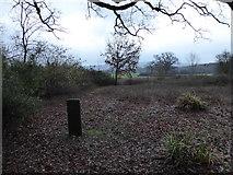 TQ0241 : St Andrew, Grafham: churchyard (d) by Basher Eyre