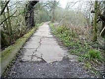 TQ1776 : Thames Path [8] by Michael Dibb