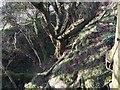 SM9037 : Sunken Track by Alan Hughes