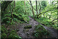 ST7765 : Path in Bathampton Wood by Bill Boaden