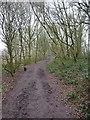 SO8282 : The Staffordshire Way across Kinver Edge by Richard Law