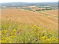 SP9516 : Ivinghoe from the Beacon by Colin Smith