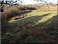 SM9037 : Woodland Boundary by Alan Hughes