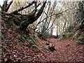TQ8019 : Sunken Lane in Brede High Woods by Patrick Roper