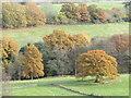 SU9940 : Winkworth - Valley Bottom by Colin Smith