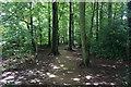 ST7762 : Woodland path on Claverton Down by Bill Boaden