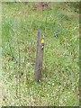 NY7282 : Waymark for the Alternative Pennine Way by Oliver Dixon