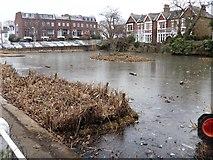 TQ1977 : Kew Green pond by Michael Dibb