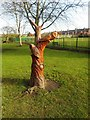 SE4521 : Tree Stump carving, Valley Gardens, Pontefract by Bill Henderson