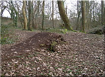 ST6470 : Launch pad in the woods by Neil Owen
