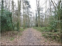 SP2778 : Tile Hill, woodland path by Mike Faherty