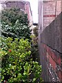 SZ1191 : Boscombe: former footpath F03 from Salisbury Road by Chris Downer