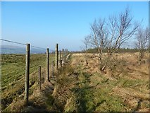 NS4178 : Fence at the edge of a field by Lairich Rig
