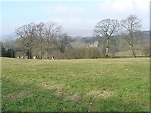 NY8013 : Sheep grazing, south of Augill Castle by Christine Johnstone