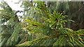 SW7727 : Water Droplets, Glendurgan Garden, Cornwall by Christine Matthews