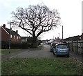 SO8013 : Dominant tree, Elmgrove Road East, Hardwicke by Jaggery