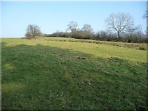 NY6120 : Field crossed by a footpath, east of the River Lyvnnet by Christine Johnstone