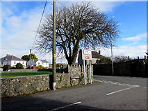 SS8178 : Tree in the SE corner of the village green, Nottage by Jaggery