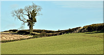 J4772 : Fields and tree, Killynether, Newtownards (March 2017) by Albert Bridge