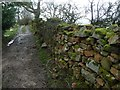 NY6926 : Drystone wall on Hurning Lane, south of Halsteads by Christine Johnstone