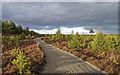 NH9114 : The Speyside Way by valenta