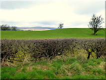 H5274 : Neatly cut hedge, Drumnakilly by Kenneth  Allen