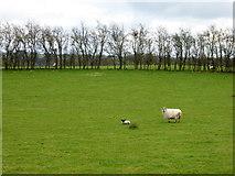 H5373 : Drumnakilly Townland by Kenneth  Allen