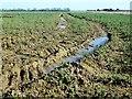 TF6803 : Tyre ruts in a field of rape in Norfolk by Richard Humphrey