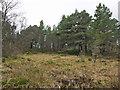 NH6750 : Loch na Girra by Julian Paren