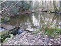 TQ4329 : Sluice and weir in Chelwood Vachery Forest Garden by Marathon