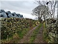NY6826 : Walled track on the south side of Priests Garden by Christine Johnstone